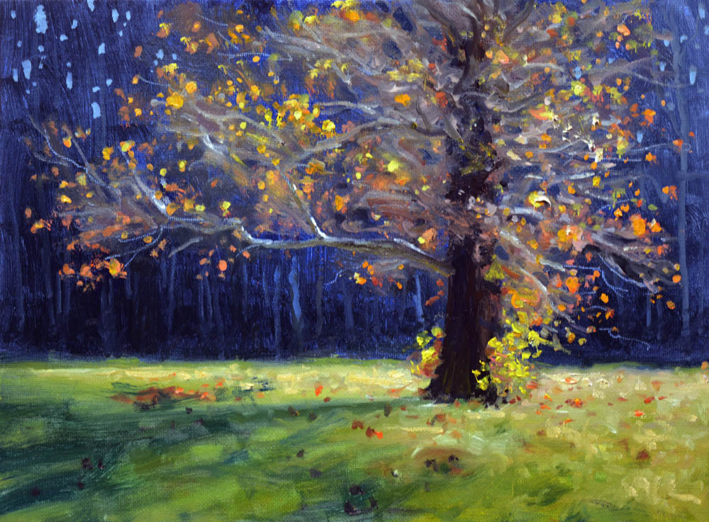 "Backlit Sycamore    9"" x 12"" Oil   Gallery Price:  $1,800    Sale Price:  $900"