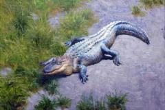 "American Alligator    9"" x 12"" Oil -  $1,800"