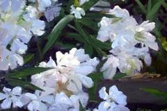 """Oleander     14"""" x 11"""" Oil      $2,400"""