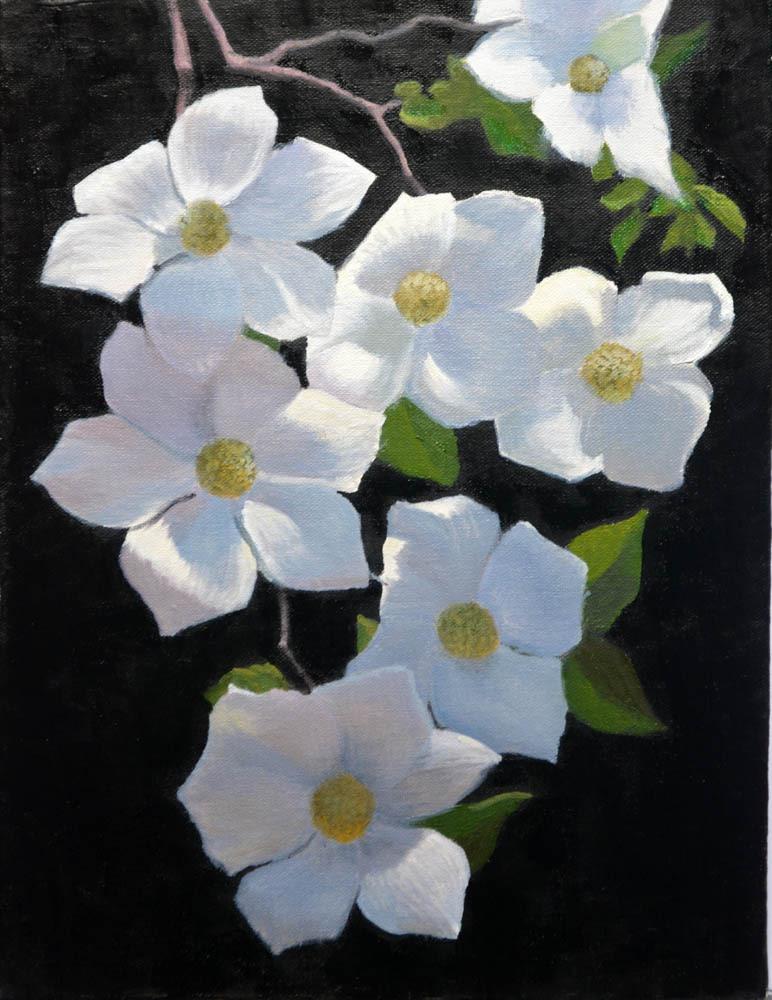 "Dogwood Blossoms     16"" x 12"" Oil     $2,600"